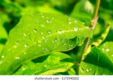 green leaves with rain drops on the street after heavy rain