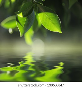 Green leaves reflecting in pond water. Closeup.