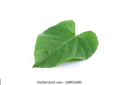Green leaves shaped like heart on white background.