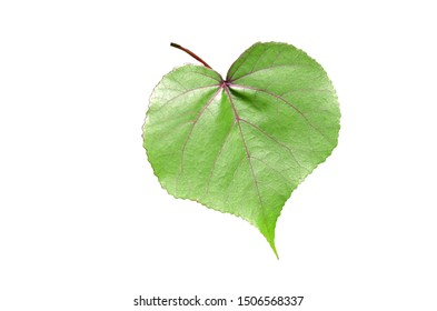 Green leaves shaped like hearts on a white background.
