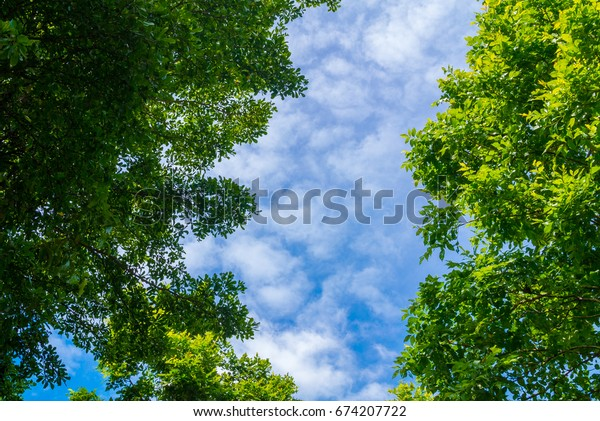 Green leaves, the sky in the middle