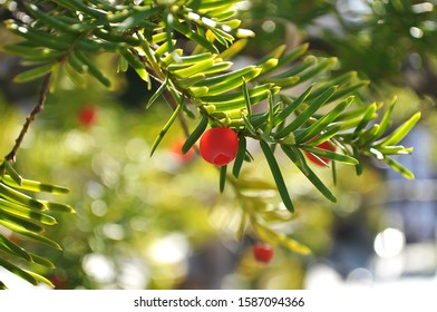 Green leaves and small red flowers