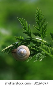 green leaves and snail, close-up