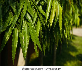 Green leaves of some trees isolated natural photo