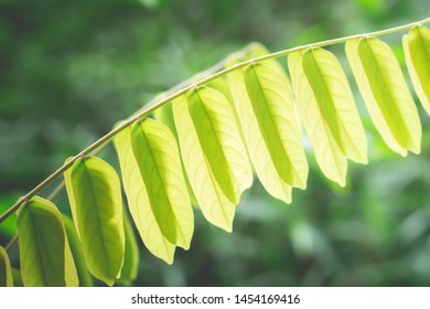 green leaves  spring nature wallpaper background