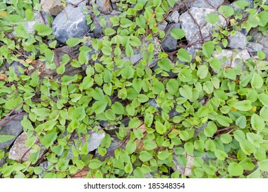 Green leaves and stone background