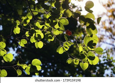 Green leaves with the sun light