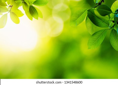 green leaves with sun light ;Nature background