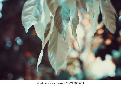 green leaves with sunrise bokeh abstract nature wallpaper background
