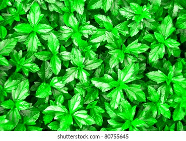 Green Leaves Texture