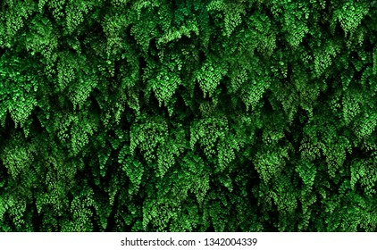 green leaves texture abstract nature wallpaper background
