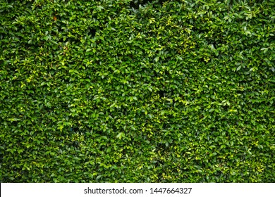 Green Leaves texture background wallpaper- Image