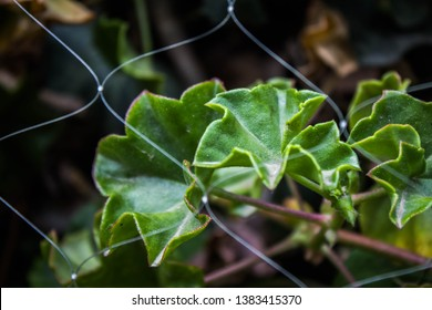 Green leaves through a fence