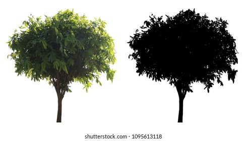 A green leaves tree and black alpha mask isolated on white background.