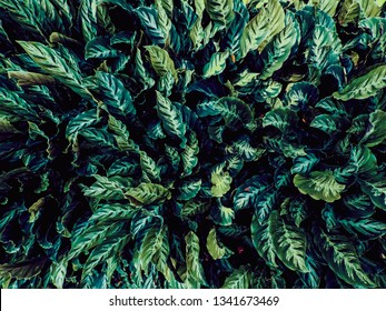 Green leaves Tropical garden for pattern background, Dark color Flat lay backdrop nature for input text.