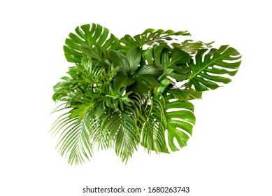 Green leaves of tropical plants bush (Monstera, palm, rubber plant, pine, bird's nest fern) floral arrangement indoors garden nature backdrop isolated on white background thailand, clipping path inclu