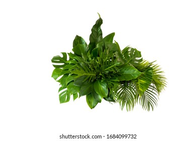 Green leaves of tropical plants bush (Monstera, palm, rubber plant, pine, bird's nest fern) floral arrangement indoors garden nature backdrop isolated on white background thailand,clipping path includ
