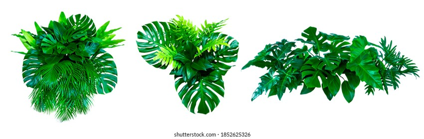 Green leaves of tropical plants bush (Monstera, palm, rubber plant, pine, bird's nest fern) floral arrangement indoors garden nature backdrop isolated on white background thailand, clipping path.  - Shutterstock ID 1852625326