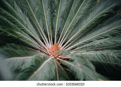 Green leaves of tropical plants close-up. Forest. Vegetation.