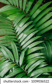 green leaves of tropical plants, texture. close up