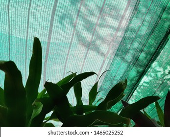 Green leaves under shade net or green slant, shadow of leaves on shading net
