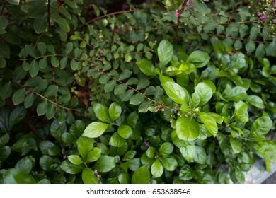 green leaves under the sunlight
