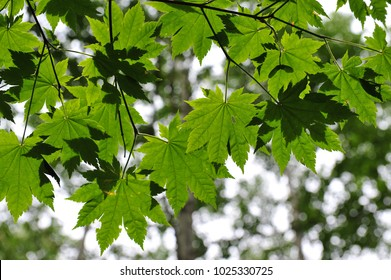 green leaves under the sunlight in forest