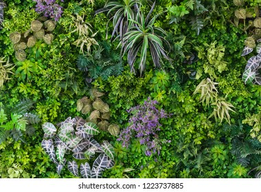 Green leaves with vegetation on wall background. Plant wall with lush green colors. Green leaves texture. used for fresh or Background concept. - Shutterstock ID 1223737885