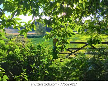 Green leaves view
