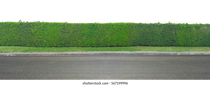 Green leaves wall and asphalt road isolated on white background