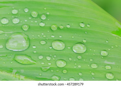 Green leaves with water drops for background.Nature texture.