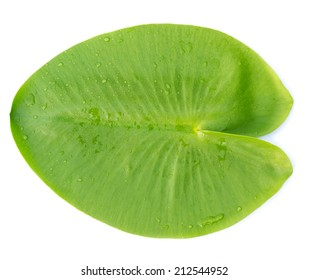 Green leaves water lily isolated on white