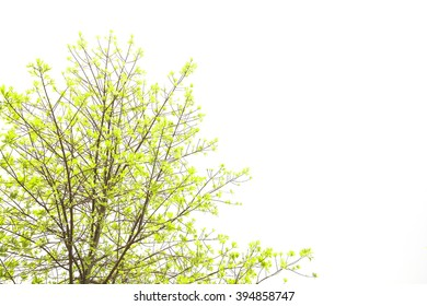 The green leaves and white background.