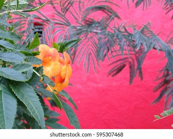 Green leaves and yellow flower in front of a bright pink wall
