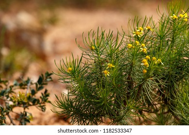 Green leaves with yellow flowers in the field