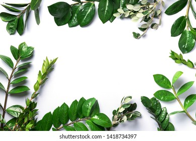 Green leaves of Zamioculcas zamiifolia on white background. Top view. Copy space. Texture of green leaves.