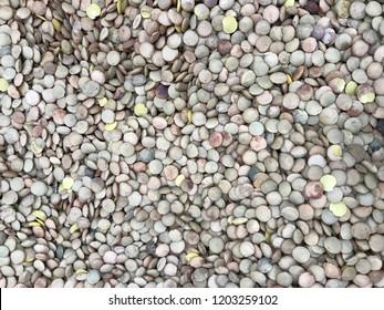 Green lentil beans