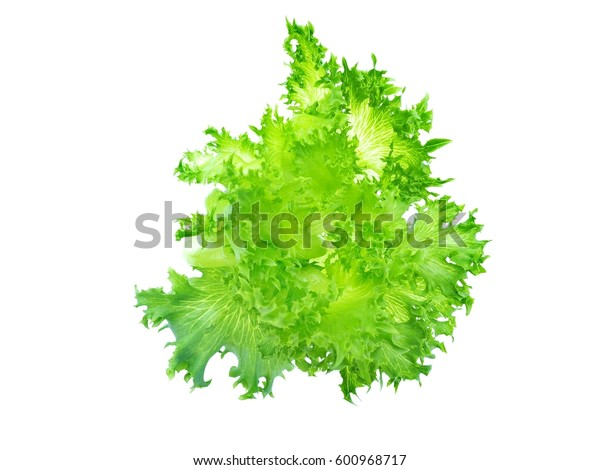 Green lettuce isolated on white background