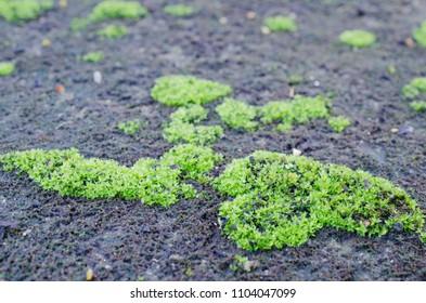 green lichen on dark ground.