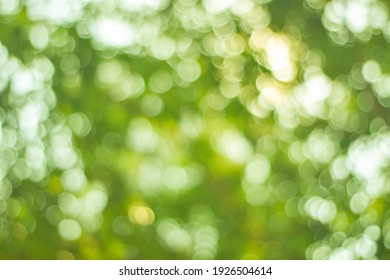 Green light bokeh nature background.Abstract blurred nature background with bokeh for creative designs.