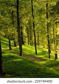 Green light through the foliage