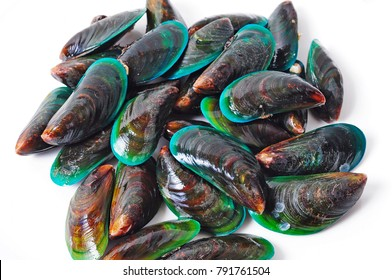 Green Lipped Mussel on white background