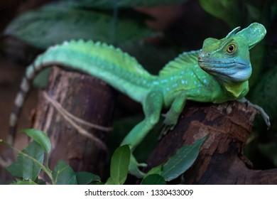 Anole Lizard Images Stock Photos Amp Vectors Shutterstock