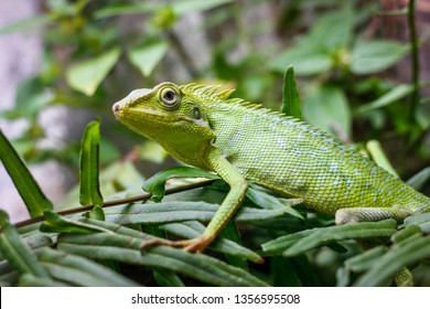 a green lizard on leaf leaves - image