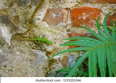 Green lizard on old brick wall with fern plant