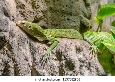 a green lizard on rock formation