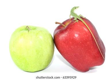 Green Lizard Standing on Red Apple