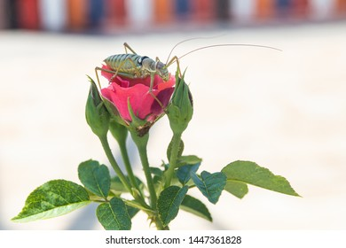 green locust insect sitting on a flower