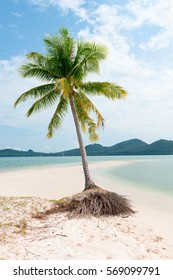 Green lonely tree palm on deserted white sand beach in tropical paradise landscape with calm clean blue sea.