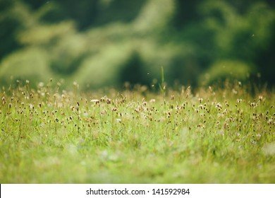 green long  grass